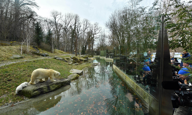 Eisbaerenbaby_TierparkHellabrunn_2017_JoergKoch_76.jpg
