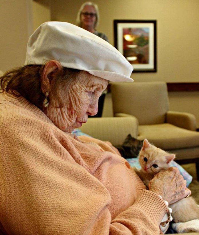 retirement-home-shelter-cats-6